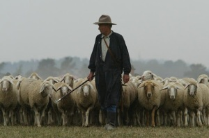bad_shepherd 2