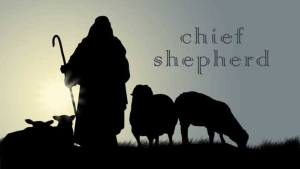 Chief-Shepherd
