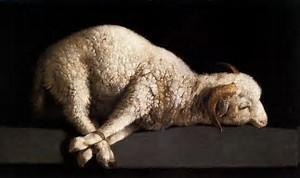 Bound Sheep