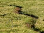 calf-path