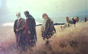 jesus-the-grain-field